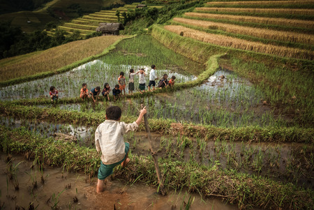 multiple ethnicity: MU CANG CHAI - SEP 25 : Undefined Childrens playing in rice terrace on september 25, 2015 at mam xoi of mu cang chai,Yenbai, Vietnam. Mu Cang Chai is famous for its rich traditional cultural art values such as its traditional dances, dishes and Sai San fe Editorial