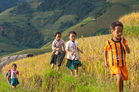 mam: YENBAI - SEP 25 : Undefined Vietnamese Hmong children are running in rice terrace on september 25, 2015 at mam xoi of mu cang chai district,Yenbai province, northwest of Vietnam. Editorial