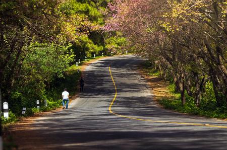 color tone: sakura road,worm color tone Stock Photo