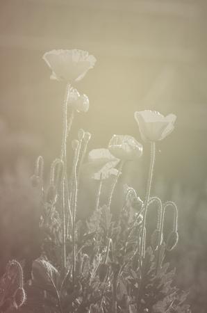 color tone: Poppy Flower, vintage color tone