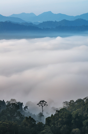 scenary: beautiful scenary of mist with mountain range at PanoenThung view point in Kaeng Krachan national park,Thailand