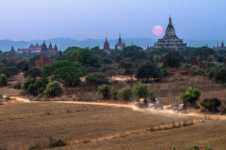cart road: Bagan pagodas field background which have Burmese rural transportation with two white oxen pulling wooden cart on dusty road with the sunset, Myanmar (Burma).