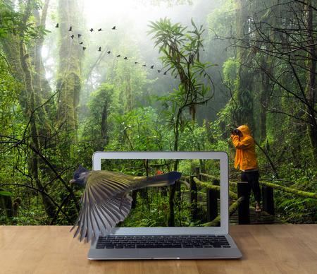 obra social: Computadora portátil en la mesa de madera que muestra el pájaro con cresta Finchbill de viajeros toma fotos en el bosque tropical hermosa, concepto 3d Foto de archivo