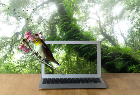 rain forest background: Laptop on the wooden table showing the Oriental White-eye bird on Beautiful rain forest background, 3d concept Stock Photo