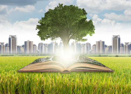 tree of knowledge: Tree growing from the old books over the grass and cityscape background, Education and knowledge with business concept Stock Photo