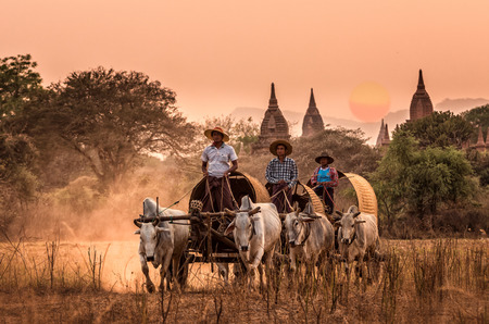 cart road: BAGAN, MYANMAR - March 10, 2016 : Undefined Burmese rural transportation with two white oxen pulling wooden cart on dusty road on the Bagan pagodas field background on March 10, 2016 in Bagan,Myanmar. Editorial
