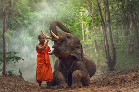 mahout: Monk with elephant in the deep forest background