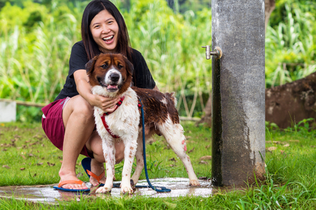 The asian women doing shower to Mixed breed dog in brown with white color standing in the resort, Lover and animal with nature concept