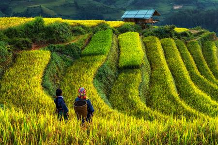 2つの未定義のベトナムのモン族は、北西ベトナムで日の出時に収穫を準備するために水田棚のテラスの幻想的な風景の中を歩いています。ムーカン