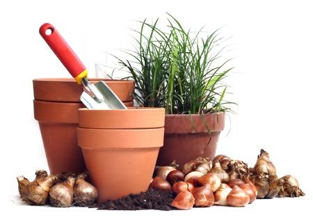 spring bulbs Standard-Bild