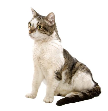 Katze Standard-Bild - 1431291