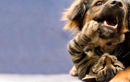 puppy and kitten Standard-Bild