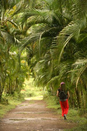 palm trail photo