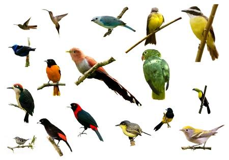 cuckoo: Types of birds