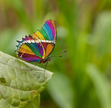 colorful butterfly: photoshoped butterfly