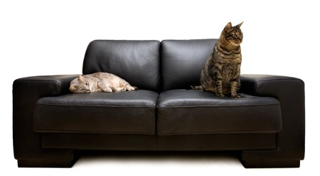 two cats on a sofa photo