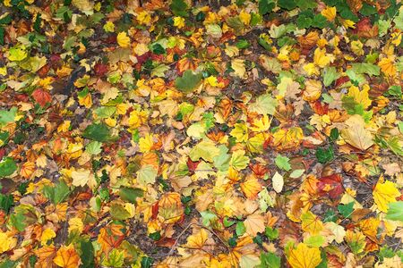 Colorful  autumn background made of leaves  Stock Photo
