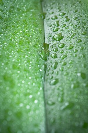 leaf with water drops-full frame view