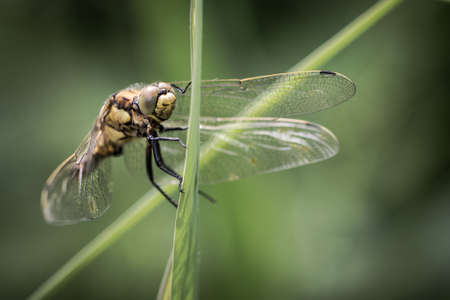 Macro dragonfly hanging on to a leaf