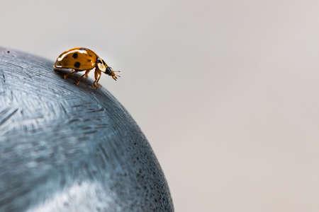 Orange ladybug on a metal sphere
