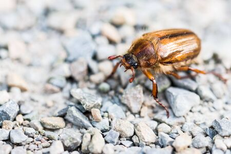Gold may bug on the sidewalk