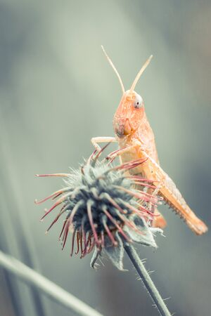 Grasshopper on top of plant