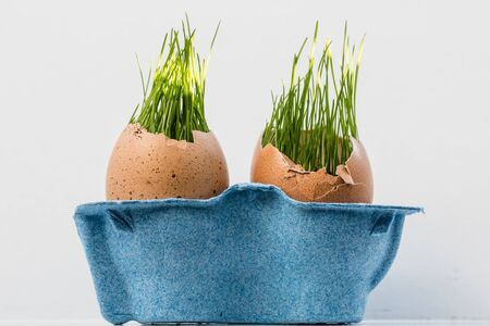Green grass growing inside brown egg shells against white background