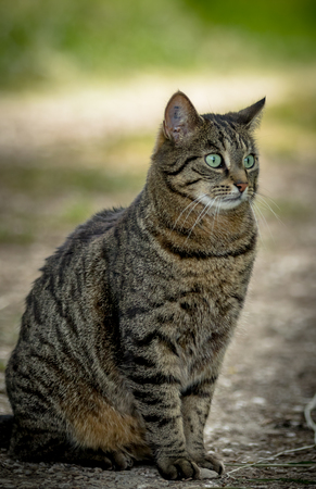 Wild cat sitting on the ground against green background