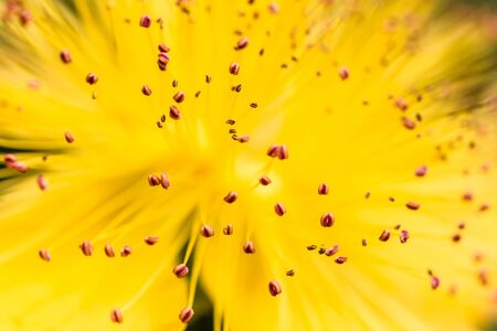 Macro image of the stamens of a yellow flower