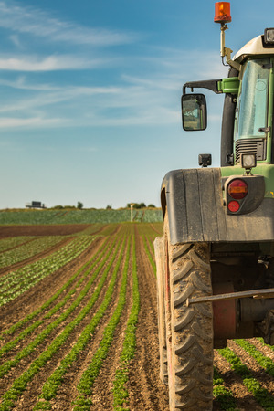 Modern agriculture with tractor on a salad field Stock Photo