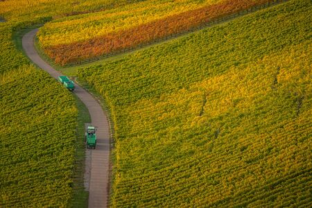 Landscape with ineyards and a path with tractor carrying grapes Stock Photo