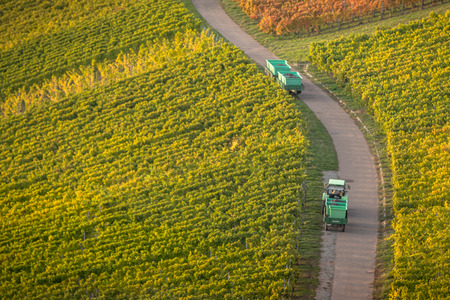 Panoramic view of vineyards and a path with tractor carrying grapes Stock Photo