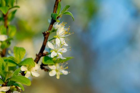 Blussom flowers