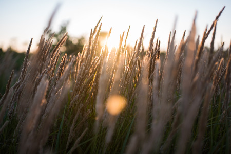 close up of grass field at sunset light. colorful nature background with butterfly