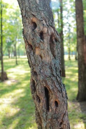 hollows: Hollows tree