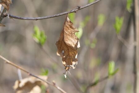Since last year, a yellowed leaf has remained on the branch, and new leaflets are visible in the distance.