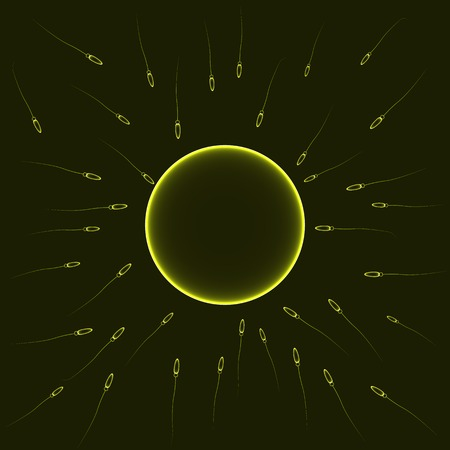 Natural insemination: sperm fertilizing egg cell, yellow illustration Vector