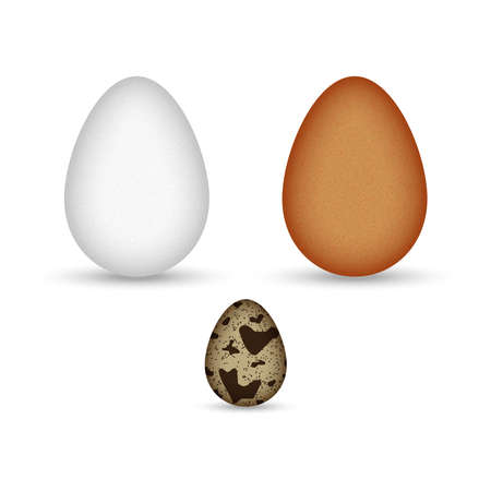 Set of brown and white chicken eggs and quail egg speckled isolated on white background realistic vector clipart.