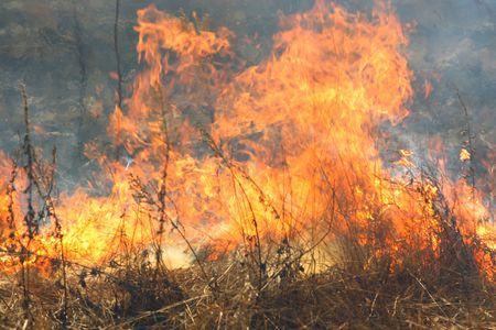 forest fire: La imagen de los incendios forestales