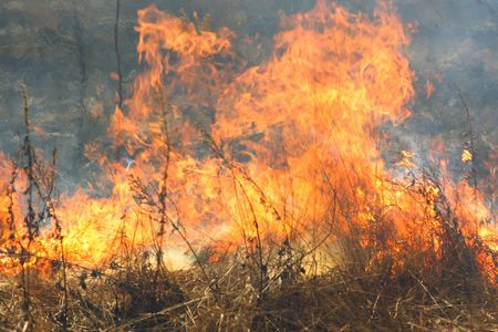 The image of the forest fire  Stock Photo