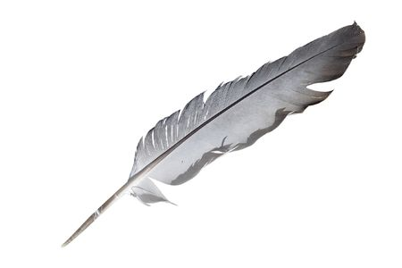 quill pen: feather under the white background