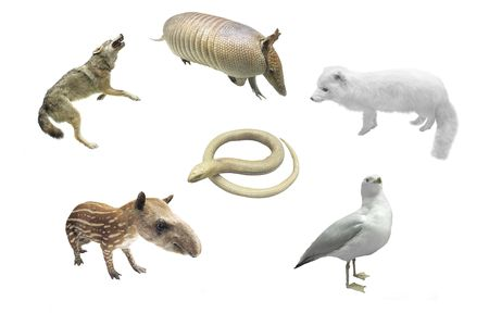 viviparous: The image of diferent animals under the white background