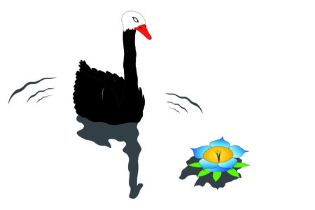 Vector illustration of black swan under the water Vector