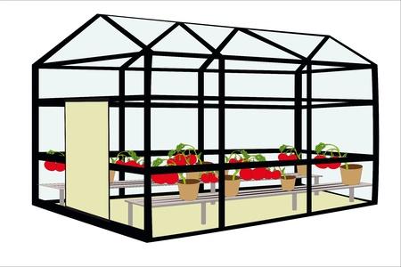 agrario: Ilustraci�n vectorial de semillero con tomates