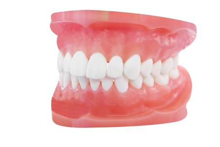 prosthesis: The image of dentures under the white background Stock Photo