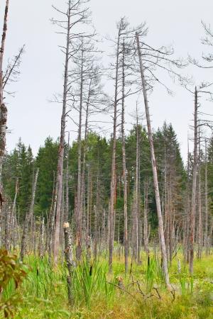 morass: Landscape with the image of bog