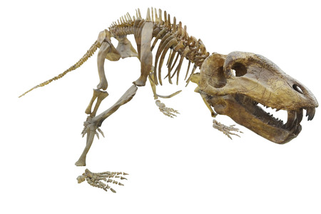 The image of dinosaurs skeleton photo