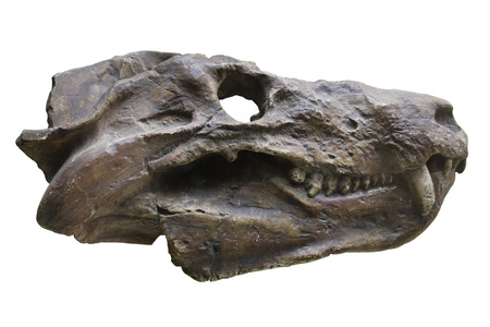 herbivore natural: The image of dinosaurs skull
