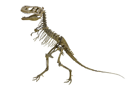 strong skeleton: The image of dinosaurs skeleton