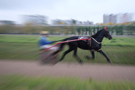image of a carriage, horse and rider on a horse race at the track photo